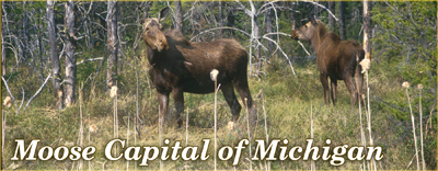 Moose Capital, Upper Michigan Moose, Moose